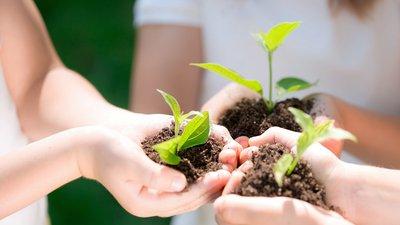 В России займутся разработкой концепции экологического образования