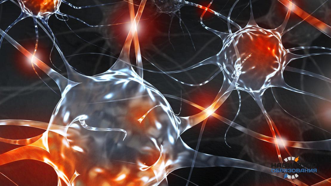 Память и интеллект: последние открытия учёных