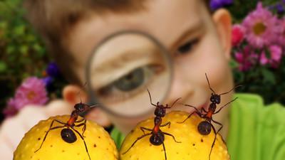 Лучшие детские лагеря России для юных натуралистов