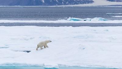 Минобрнауки и Минприроды организуют проведение в школах России «Арктического урока»