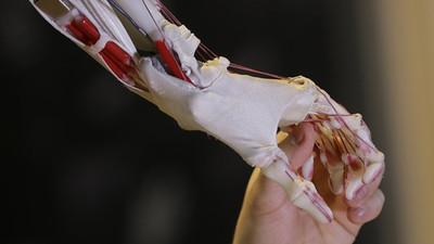 Ученые НИТУ «МИСиС» создали материал для искусственных мышц и суставов